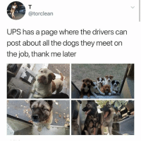 thank me later: @torclean  UPS has a page where the drivers can  post about all the dogs they meet on  the job, thank me later