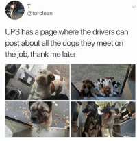 Dogs, Memes, and Ups: @torclean  UPS has a page where the drivers can  post about all the dogs they meet on  the job, thank me later