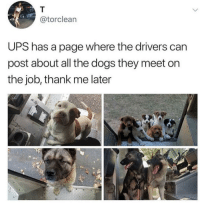 Nice doggos: @torclean  UPS has a page where the drivers can  post about all the dogs they meet on  the job, thank me later Nice doggos