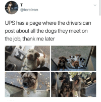 Wholesome UPS: @torclearn  UPS has a page where the drivers can  post about all the dogs they meet on  the job, thank me later Wholesome UPS