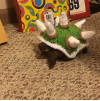 Funny, Hot, and Knitting: Tortoise knit sweaters, so hot right now.