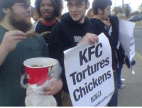 A fried chicken related post was needed - Furmin: Tortures  Chickens  /C A fried chicken related post was needed - Furmin