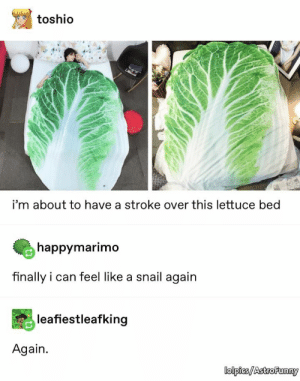 Stroke, Can, and Lettuce: toshio  i'm about to have a stroke over this lettuce bed  happymarimo  finally i can feel like a snail again  leafiestleafking  Again.  lolpies/AstroFunny