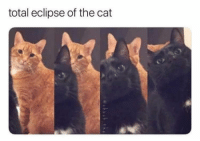 Eclipse, Cat, and Total: total eclipse of the cat <p>Catlipse</p>