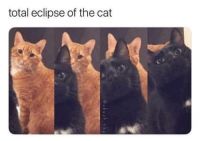 Eclipse, Cat, and Total: total eclipse of the cat <p>Eclipse total de gato</p>