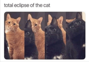 Eclipse, Cat, and Total: total eclipse of the cat Eclipce of the cat