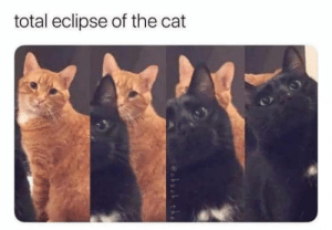 Dank, Memes, and Reddit: total eclipse of the cat  @hnch the Catlipse by awalme FOLLOW 4 MORE MEMES.