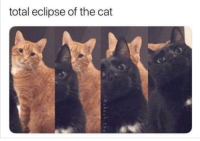 Eclipse, Cat, and Total: total eclipse of the cat Turn Around