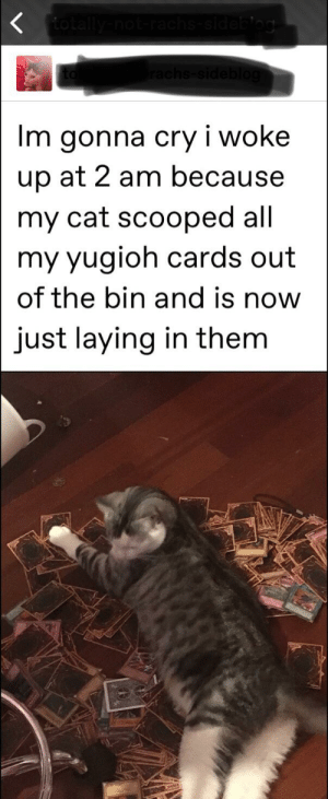 Yugioh, Mad, and Cat: totally  og  Im gonna cry i woke  up at 2 am because  my cat scooped all  my yugioh cards out  of the bin and is now  just laying in them Mad cat