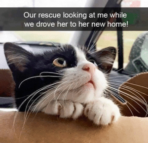 Totally squee-worthy! #Memes #Snapchat #Cats #Cute #Animals: Totally squee-worthy! #Memes #Snapchat #Cats #Cute #Animals