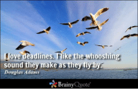 I love deadlines. I like the whooshing sound they make as they fly by. - Douglas Adams https://www.brainyquote.com/quotes/authors/d/douglas_adams.html #brainyquote #QOTD #bird #sky: tove deadlines Tike the whooshing  sound they make as they fly by  Douglas Adams  Brainy  Quote I love deadlines. I like the whooshing sound they make as they fly by. - Douglas Adams https://www.brainyquote.com/quotes/authors/d/douglas_adams.html #brainyquote #QOTD #bird #sky