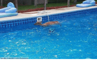 Earlier this week, New Jersey police officers came to the rescue of a deer splashing around in a resident's pool. The animal was safely removed and released back into the wilderness.: Township of Hamilton Police Department Earlier this week, New Jersey police officers came to the rescue of a deer splashing around in a resident's pool. The animal was safely removed and released back into the wilderness.