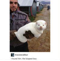 Alive, Memes, and Boy: traceexcalibur  I found him. the biggest boy whipped cream but it's Alive!! - Max textpost textposts