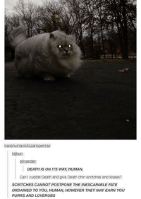 Death, Kiss, and Humans of Tumblr: transhumanisticpanspermia:  kiji kun:  ollvandert  DEATH IS ON ITS WAY HUMAN.  Can l cuddle Death and give Death chin scritches and kisses?  SCRITCHES CANNOT POSTPONE THE INESCAPABLE FATE  ORDAINED TO YOU, HUMAN, HOWEVER THEY MAYEARN YOU  PURRS AND LOVER UBS