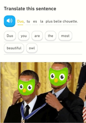 Pro gamer move. by ankit_dey MORE MEMES: Translate this sentence  Duo, tu  es la plus belle chouette  the  Duo  most  you  are  owl  beautiful Pro gamer move. by ankit_dey MORE MEMES
