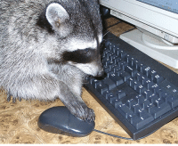 Trash Pandas are adept at troubleshooting computer problems, though they are a bit obsessed with the emptying the trash...: Trash Pandas are adept at troubleshooting computer problems, though they are a bit obsessed with the emptying the trash...