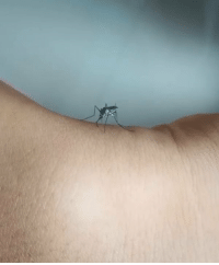 Memes, 🤖, and Mosquito: Traumatise mosquito with your thick skin @9gagmobile