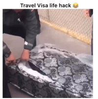 Funny, Life, and Wtf: Travel Visa life hack He came out like wtf is going on😂💀