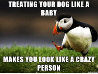 Crazy, Baby, and Dog: TREATING YOUR DOG LIKE A  BABY  MAKES YOU LOOK LIKE A CRAZY  PERSON  on imqu