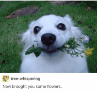 Flowers, Tree, and Navi: tree-whispering  Navi brought you some flowers.