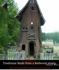 Stumpy: Treehouse Made from a Redwood Stumpy