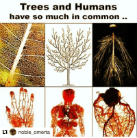 Repost @noble_omerta with @repostapp ・・・ Wanna WORSHIP something??... Get Wit NATURE ⚡✋: Trees and Humans  have so much in common.  ti. noble omerta Repost @noble_omerta with @repostapp ・・・ Wanna WORSHIP something??... Get Wit NATURE ⚡✋