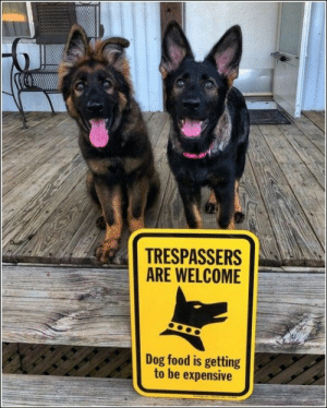100 Of Today's Freshest Pics And Memes: TRESPASSERS  ARE WELCOME  Dog food is getting  to be expensive 100 Of Today's Freshest Pics And Memes