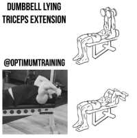 Memes, Exercise, and Maine: TRICEPS EXTENSION  @OPTIMUMTRAINING DUMBBELL LYING TRICEPS EXTENSION Main Muscle: Triceps Secondary Muscle: Deltoids Exercise Type: Push, Isolation Equipment Required: Bench, Dumbbell This is a great assistance exercise to isolate and strengthen your triceps. Instructions: 1️⃣ Lie face up on a bench with dumbbells in each hand and your arms extended perpendicular to your chest over your head. 2️⃣ While keeping your elbows in one place, lower your hands so the dumbbells are lowered near your head and your forearms are touching your biceps. 3️⃣ Pause for a moment then slowly return to the starting position by extending your arms and pressing the weights above your head. Tips: 1️⃣ Stay seated and keep your feet firmly on the floor throughout this exercise. 2️⃣ Keep your elbows in a fixed position throughout the exercise. OptimumTraining