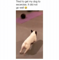 Memes, 🤖, and Dog: Tried to get my dog to  excercise. It did not  go well That ball didn't stand a chance 😂 Credit: @carkicsandra