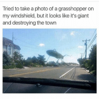 WHOAAAA (@_kevinboner): Tried to take a photo of a grasshopper on  my windshield, but it looks like it's giant  and destroying the town WHOAAAA (@_kevinboner)