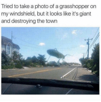 grasshopper: Tried to take a photo of a grasshopper on  my windshield, but it looks like it's giant  and destroying the town