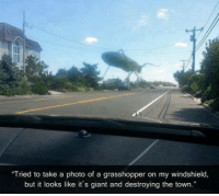 """grasshopper: """"Tried to take a photo of a grasshopper on my windshield,  but it looks like it's giant and destroying the town."""""""