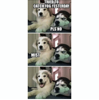 Dogs, Funny, and Memes: TRIEDTO  CATCH FOG YESTERDAY  PLS NO  MIST Classic dogs memes