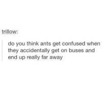 :0: trillow  do you think ants get confused when  they accidentally get on buses and  end up really far away :0