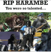 What Is Harambe: TRIP HARAMBE  You were so talented...