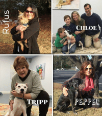 Memes, Noah, and Pup: TRIPP  CHLOE  PEPPER Rufus, Chloe, Tripp, & Pepper have been ADOPTED.  We all needed some good news to pick up everyone's Spirits. I am happy to report that Chloe, Rufus, Tripp and Pepper have all been placed in the most amazing homes.   Rufus is now able run around without his bandages and has moved to Brewster, NY. Chloe lives with a wonderful Family in Beaufort, SC and is growing like a week. Our amazing Pepper lives in Lexington, SC and is getting to see her Surgical Team at Carolina Veterinary Specialists in Matthews, NC when she goes in for her monthly chemotherapy sessions. Last but certainly not least, our boy Tripp is living the good Life in Bluffton, SC. Tripp comes by and visits with us when he is in the area which always puts a smile on our faces.  We have lots of great pups that have completed their Medical Care and are ready for their Forever Homes. Each pup has been thoroughly evaluated and is up to date on all of their shots. All dogs are microchipped the minute they come into the hospitals, so there is never any confusion who they belong to. If you are looking for that special dog to join your Family, please, give one of our Abused Animals a chance. These animals have survived the worst abuse you could imagine, and they still love unconditionally. Your Best Friend might be right around the corner. If you want to know which dog might be perfect for your Family, please drop us a note, and we will do our best to help you find the perfect one.   Thanks for making their Journey's possible. These pups have Healed and found unconditional Love because you Cared.  http://www.noahs-arks.net/donations/all