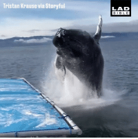 Dank, Bible, and 🤖: Tristan Krause via Storyful  LAD  BIBLE 'They told us that if we were lucky we could see whales...' 😂💦