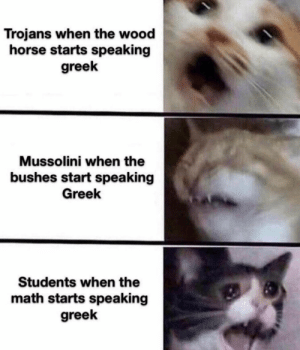 *laughs in greek*: Trojans when the wood  horse starts speaking  greek  Mussolini when the  bushes start speaking  Greek  Students when the  math starts speaking  greek *laughs in greek*