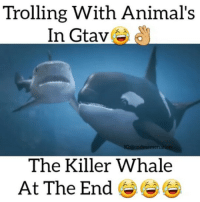 "Killer Whales, Memes, and Troll: Trolling With Animal's  In Gtav  IG: i codmemenati  The Killer Whale  At The End Try commenting ""animal"" 1 letter at a time without being interrupted ☟☟☟DOUBLE TAP 💕😂FOLLOW @codmemenation for more!☺👌TAG A FRIEND 👍😂 ➖➖➖➖➖➖➖➖➖➖➖➖➖➖➖➖➖✔video from: @igtaking caption from me💕 Follow my backup @cod_meme_nation 😎 Animal page🐶@animal.angel ➖➖➖➖➖➖➖➖➖➖➖➖➖➖➖ ❤Leave a Like❤ 🗨Or a comment💬 😷hate-self promotion=delete😷 stay classy 🎩and have a nice day 😀👍 ➖➖➖➖➖➖➖➖➖➖➖➖➖➖➖ ⏬ Hasgtags (ignore) ⏬ cod callofduty callofdutymemes kontrolfreeks gfuel game gaming gamingmeme gamer fazerain gamer scuf meme memes dank dankmemes battlefield battlefield1 battlefield4 gta gtav gta5 gtavonline cod4 comedy savage humor"