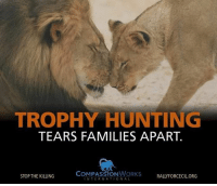 Non-human animals have families, feel connections and loss just like us. maketheconnection compassionworks: TROPHY HUNTING  TEARS FAMILIES APART.  COMPASSION WORKS  STOP THE KILLING  RALLY FORCECIL ORG  INTERNATIONAL Non-human animals have families, feel connections and loss just like us. maketheconnection compassionworks