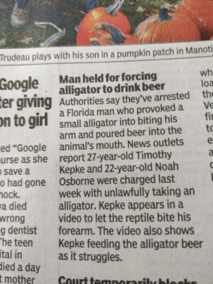 "Florida Man is now in the news in India too: Trudeau plays with his son in a pumpkin patch in Manoti  wh  loa  Man held for forcing  alligator to drink beer  Authorities say they've arrested the  a Florida man who provoked a  small alligator into biting his  arm and poured beer into the  animal's mouth. News outlets  report 27-year-old Timothy  Kepke and 22-year-old Noah  Osborne were charged last  week with unlawfully taking an  alligator. Kepke appears in a  video to let the reptile bite his  forearm. The video also shows  Kepke feeding the alligator beer  as it struggles.  Google  er giving  on to girl  Ve  fi  to  e  ed ""Google  urse as she  a  save a  o had gone  hock.  a died  wrong  g dentist  The teen  tal in  died a day  t mother  Court temnorariby hlocke Florida Man is now in the news in India too"