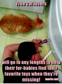 Isn't that just the truth.: True Cat lovers  will go to any lengths to help  their fur babies find their  favorite toys when they're  missing! favorite cats Isn't that just the truth.