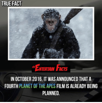 Who knew? This looks like it'll be a great movie! QOTD: Do you want a fourth planetoftheapes movie? 🎥 • strangerthings gameofthrones thewalkingdead gotham arrow cars3 justiceleague movies thehouse tvshows theflash tlk themist americangods youtube got marvel fearthewalkingdead starwars dbz mw love followme wwe like spiderman babydriver transformers homecoming: TRUE FACT  NTERTAIN FACTS  IN OCTOBER 2016, IT WAS ANNOUNCED THAT A  FOURTH PLANET OF THE APES FILM IS ALREADY BEING  PLANNED Who knew? This looks like it'll be a great movie! QOTD: Do you want a fourth planetoftheapes movie? 🎥 • strangerthings gameofthrones thewalkingdead gotham arrow cars3 justiceleague movies thehouse tvshows theflash tlk themist americangods youtube got marvel fearthewalkingdead starwars dbz mw love followme wwe like spiderman babydriver transformers homecoming