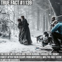 Memes, Summer, and The Middle: TRUE FACT t 1139  THE SCENE WITH SANSA AND THEON RUNNING THROUGH THE SNOWY  FORESTAFTER THEIR ESCAPE FROM WINTERFELL WAS THE FIRST SCENE  FILMED FOR SEASON 6 It was filmed in the middle of summer and was about 80 degrees Fahrenheit when they filmed it gameofthrones gameofthronesfamily asoiaf asongoficeandfire sansastark sophieturner theongreyjoy alfieallen tv follow