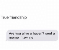 Alive, Funny, and Meme: True friendship  Are you alive u haven't sent a  meme in awhile Tag this friend smh
