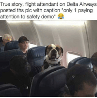 "Funny, True, and Delta: True story, flight attendant on Delta Airways  posted ths pic with caption ""only 1 paying  attention to safety demo"" Who's a good boy?... he's a good boy😂"