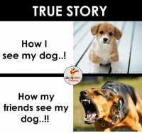 Reality Check... (Y) ;): TRUE STORY  How I  see my dog..!  LAUGHING  How my  friends see my  dog..!! Reality Check... (Y) ;)