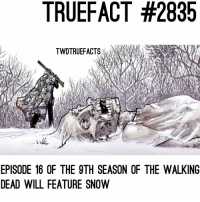 """Not a huge enough spoiler to use the """"swipe to reveal or to post on my personal'ss story, but we got snowwwwww, FINALLY ! But we are slowly revealing who survives season 9 one by one on the story ☺️ we just posted one today on @yungnodachidick (if you been a twd fan , you're probably like """"thank fuckin' god the character survives"""" ) 😂 twd thewalkingdead walkingdead: TRUEFACT #2835  TWDTRUEFACTS  EPISODE 16 OF THE 9TH SEASON OF THE WALKING  DEAD WILL FEATURE SNOW Not a huge enough spoiler to use the """"swipe to reveal or to post on my personal'ss story, but we got snowwwwww, FINALLY ! But we are slowly revealing who survives season 9 one by one on the story ☺️ we just posted one today on @yungnodachidick (if you been a twd fan , you're probably like """"thank fuckin' god the character survives"""" ) 😂 twd thewalkingdead walkingdead"""