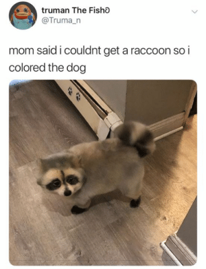 That's cute as hell honestly (credit & consent: @trumanalexander): truman The Fisho  @Truma_n  mom said i couldnt get a raccoon so i  colored the dog That's cute as hell honestly (credit & consent: @trumanalexander)