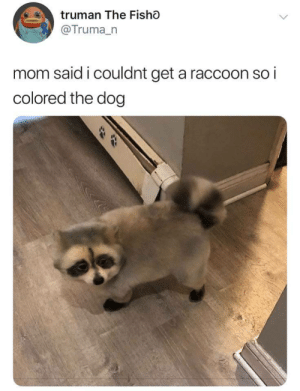 Frick you mom i do what i want: truman The Fisho  @Truma_n  mom said i couldnt get a raccoon so i  colored the dog Frick you mom i do what i want